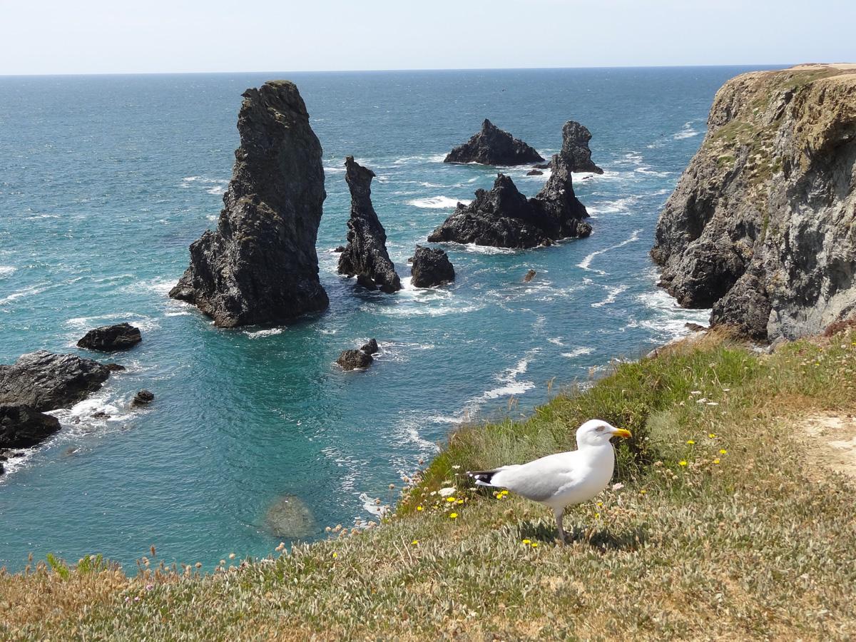 Goéland argenté et les Aiguilles de Port Cotton