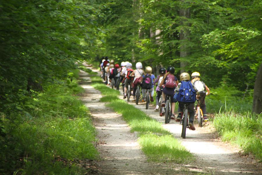 Balade en VTT dans la forêt de Fontainebleau