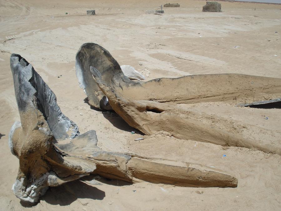 Os de baleines a la sortie du desert
