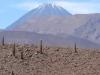 Chili,Volcan Licancabur et cactus candelabre.JPG